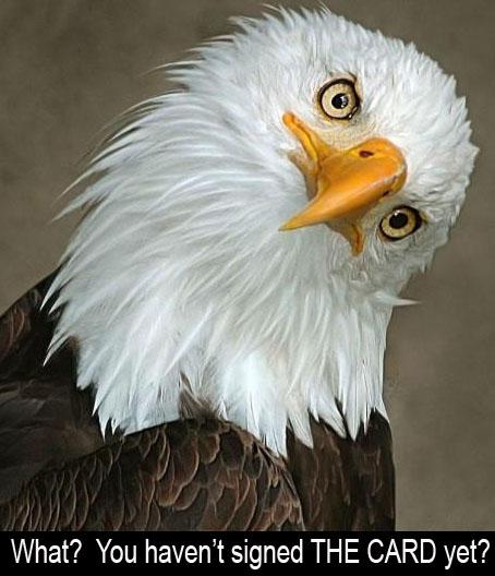 questioning eagle